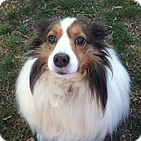 Adopt A Pet :: Winona - La Habra, CA