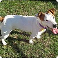 Adopt A Pet :: BONNIE - Scottsdale, AZ