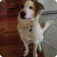 Adopt A Pet :: Elliott - Hamilton, ON