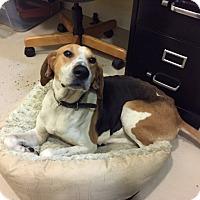 Adopt A Pet :: Ellie May-URGENT - Providence, RI