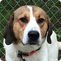 Adopt A Pet :: Biggie - Brattleboro, VT
