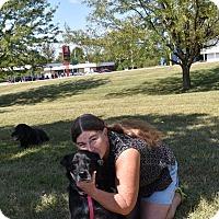 Labrador Retriever Mix Dog for adoption in Columbus, Indiana - Hera