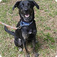 Adopt A Pet :: Stella - Staunton, VA