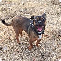 Adopt A Pet :: Charlie Brown - Greensboro, GA