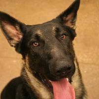 Adopt A Pet :: Jack Skeelington - Louisville, KY