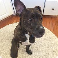 Adopt A Pet :: Larkin aka Max - Garden City, MI