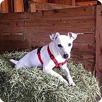 Adopt A Pet :: ANGIE - Terra Ceia, FL