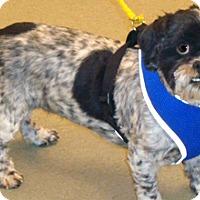 Adopt A Pet :: Prissy - Wildomar, CA