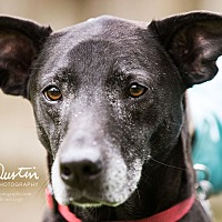 Adopt A Pet :: Lucy - North Bend, WA