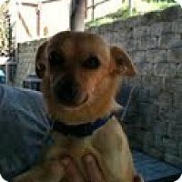 Adopt A Pet :: Flipper - Modesto, CA