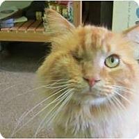 Adopt A Pet :: Apricot - Bunnell, FL