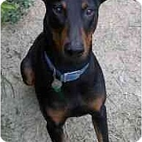 Adopt A Pet :: Eve--adopted!! - New Richmond, OH