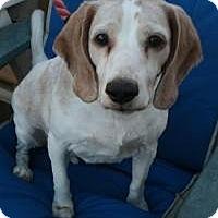 Adopt A Pet :: Presley - Canoga Park, CA