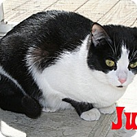 Adopt A Pet :: Judy - East Stroudsburg, PA