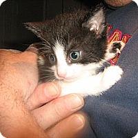Adopt A Pet :: Daisy - Westfield, MA
