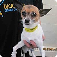 Adopt A Pet :: Chico - Toledo, OH