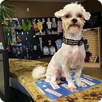 Adopt A Pet :: Westley - Corona, CA