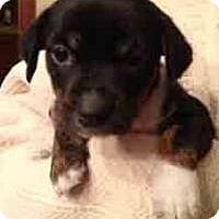 Adopt A Pet :: Petunia - Marlton, NJ