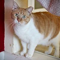 Adopt A Pet :: Malcolm - San Antonio, TX