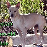 Adopt A Pet :: Dingo - Boaz, AL