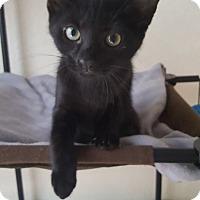 Adopt A Pet :: Savannah - Brandon, FL