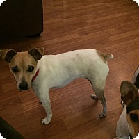 Adopt A Pet :: Annie Oakley - Homewood, AL