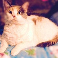 Adopt A Pet :: 15-013 Mama Cat - York County, PA
