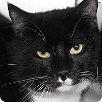 Adopt A Pet :: MURPHY - Clayton, NJ