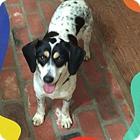 Adopt A Pet :: Fancy - Hanover, PA