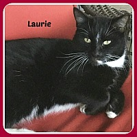 Adopt A Pet :: LAURIE - Malvern, AR