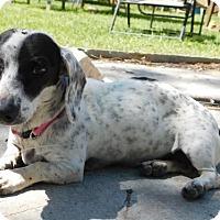 Adopt A Pet :: Penny - Humble, TX