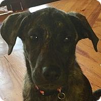 Adopt A Pet :: Chloe - Little Rock, AR