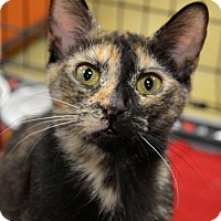 Adopt A Pet :: Mimi - Hamilton, ON