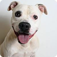 Adopt A Pet :: Wilson - Redding, CA