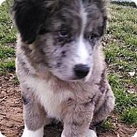 Adopt A Pet :: Anna - New Boston, NH