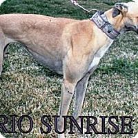 Adopt A Pet :: Rio Sunrise - Vidor, TX