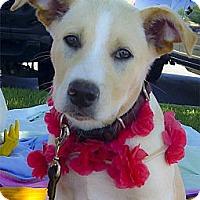 Adopt A Pet :: Ruthie sweet pup - Sacramento, CA