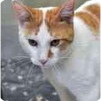 Adopt A Pet :: Alfie - Markham, ON