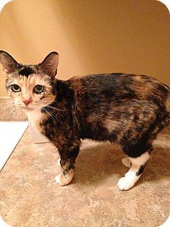 Domestic Shorthair Cat for adoption in Bruce Township, Michigan - Geisha