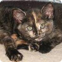 Adopt A Pet :: kittens - brewerton, NY