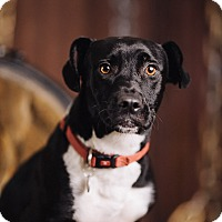 Adopt A Pet :: Corkscrew - Portland, OR