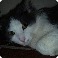 Adopt A Pet :: Tyke - Hamburg, NY