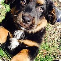Adopt A Pet :: Hank - Marlton, NJ