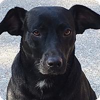 Adopt A Pet :: Jenny - Spring Valley, NY