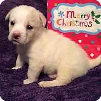 Adopt A Pet :: Cranberry - Greensboro, GA