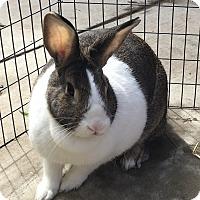 Adopt A Pet :: Shortcake - Bonita, CA