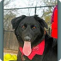 Adopt A Pet :: Palmer - Eddy, TX