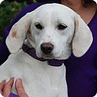 Adopt A Pet :: Claire - Harrisburgh, PA