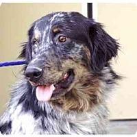 Adopt A Pet :: Taylor - Orlando, FL