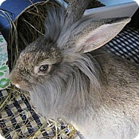 Adopt A Pet :: Carreen - North Gower, ON